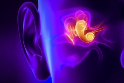 MIT-Ear-Imaging-1_0
