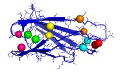 2019_106_KI zur Vorhersage von Proteinstruktur entwickelt_72dpi