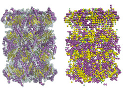 An example of the secondary structure detection in cryo-EM density map using Emap2Sec. Left, EM map of archaeal 20S proteasome (EMDB ID: EMD-1733). Right, detected secondary structures by Emap2Sec. Points in magenta are the positions of detected alpha helices; yellow points are detected beta strands, and green points are for detected coils (other structures).