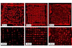 csm_Bioprinting_d41677f0ee