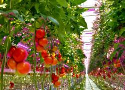 300dpi_Horticulture