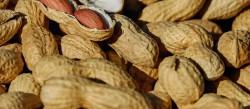 nuts-1736520_1920-1920x840