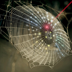 A spiderweb-inspired fractal design is used for hemispherical 3D photodetection to replicate the vision system of arthropods. (Sena Huh image)