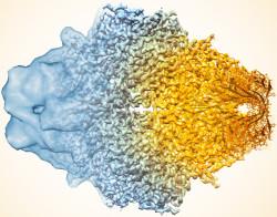 図1 (a)可視光硬化の3成分系の一般的なメカニズム(酸化クエンチ)(左)と光開始剤(PI)及び光酸化還元触媒(PRC)の化学構造、それらに対応する定性的ゲル化時間の光硬化フィルムの画像(右)。(b)ヨードニウムアクセプター( A )、ホウ酸塩ドナー( D )共開始剤の化学構造。(c)不透明剤(OA)の化学構造。(d)最適光硬化濃度におけるPIとPRC混合物の波長に対する光吸収。OA は0.5mM(赤)、1mM(緑、青、紫)。光露出はDLP3Dプリンターイメージ面において較正された紫(405nm)、緑(460nm)、青(525nm)、赤( 615nm)のLEDによる。(画像提供:テキサス大)